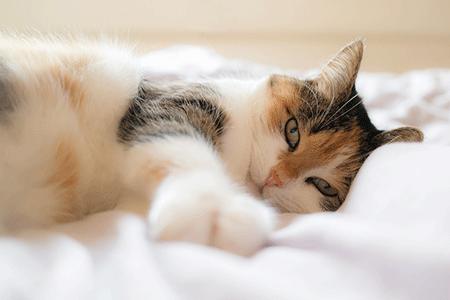 chat en appartement