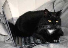 Pourquoi mon chat se couche sur les objets que j'utilise