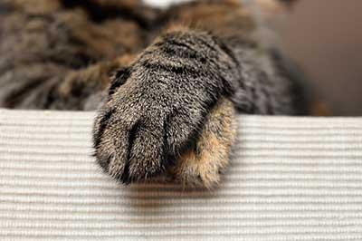 Mon chat n'aime pas que je lui touche les pattes