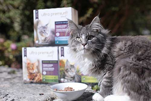 ultra premium direct maine coon
