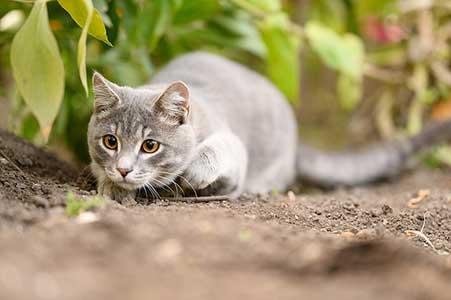 croquettes chat sans céréales