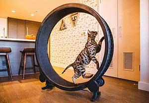 roue pour chat d'interieur