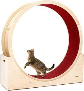 roue pour chat
