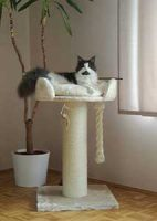 arbre a chat rhrquality