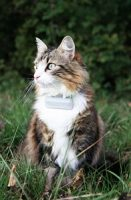collier gps weenect chat