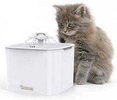 fontaine a eau pour chat